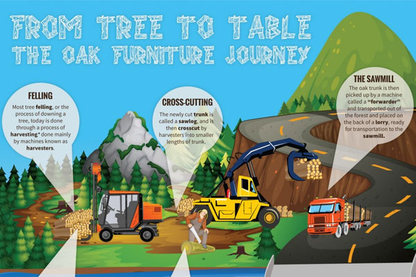 From Tree to Table the Oak Furniture Journey